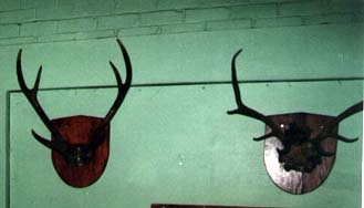 wall mounted hunting trophies